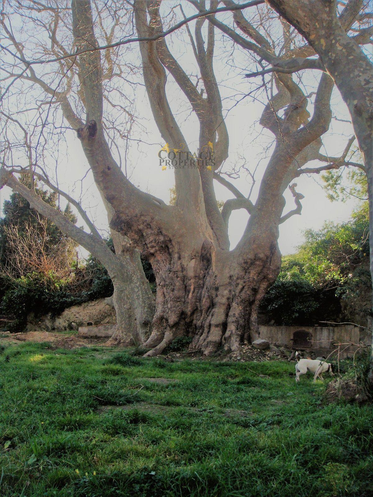 Jardín (arbol y fuente)